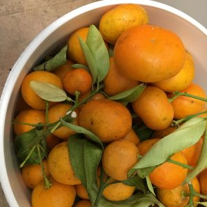 Photo of Seville oranges straight from the tree